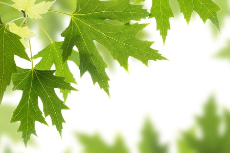 Nature background leaves border Stock Photo