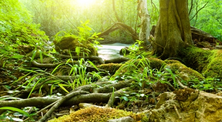 rain forest background: Forest river Stock Photo
