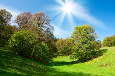 airs: Landscape with green grass and trees and blue sky Stock Photo