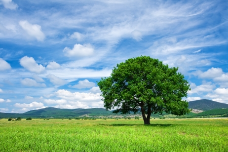 Tree on green meadow Stock Photo