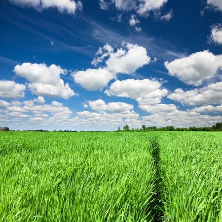 horizon over land: Green field