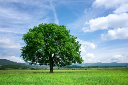single tree: Tree on green field