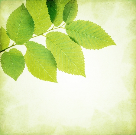 elm: Abstract nature background leaves frame