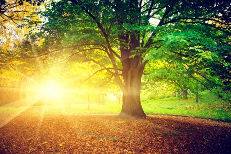 calm background: Beautiful park
