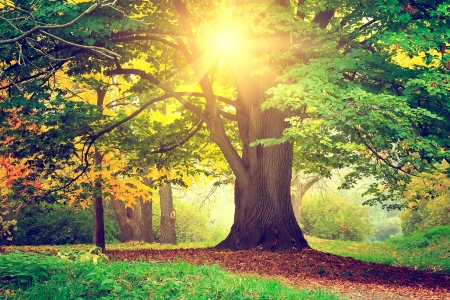 ek: Vacker park träd Stockfoto