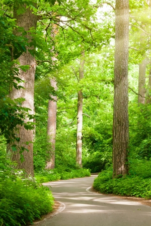 Bos weg
