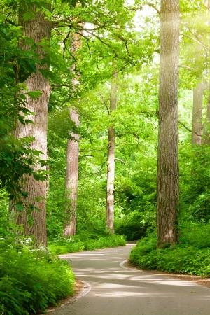 Forest road 版權商用圖片