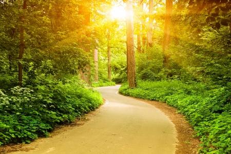 Camino forestal Foto de archivo - 20379495