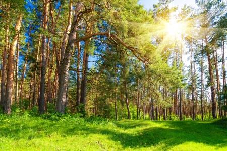 Forest landscape Banco de Imagens