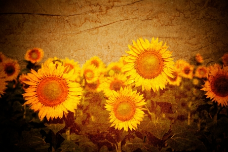 Sunflowers vintage background photo