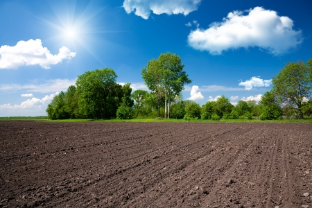 agriculture industry: Farm field