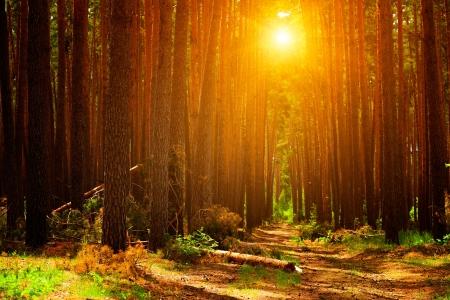 summer landscape: Forest landscape Stock Photo