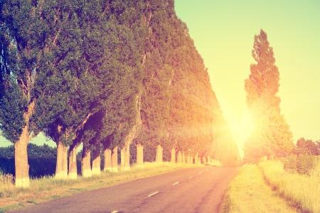 autumn road: Road landscape