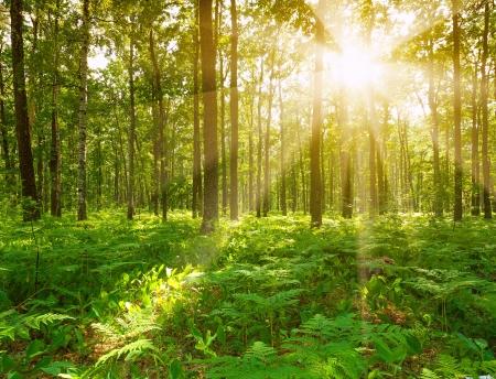 helechos: Del paisaje forestal