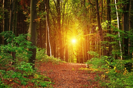 Forest landscape Banque d'images