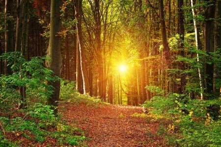 beech leaf: Forest landscape Stock Photo