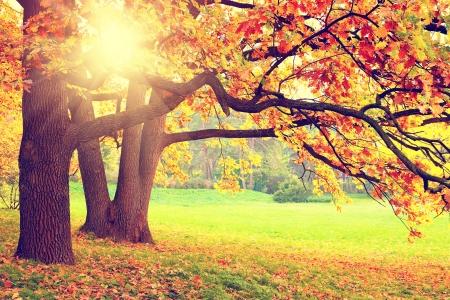 autumn scene: Autumn landscape Stock Photo