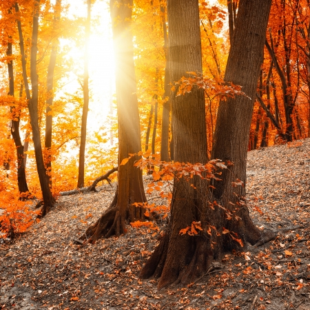 fall sunrise: Autumn landscape Stock Photo