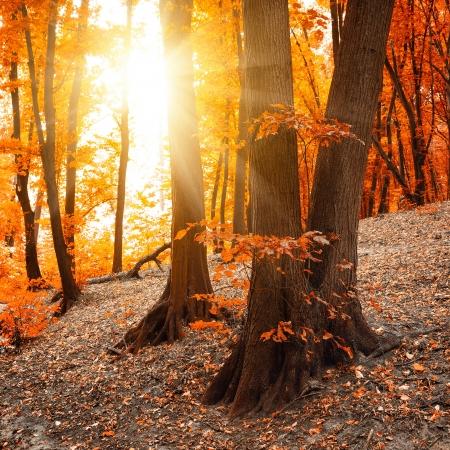 october: Autumn landscape Stock Photo