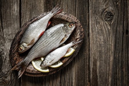 european roach: Fish Stock Photo