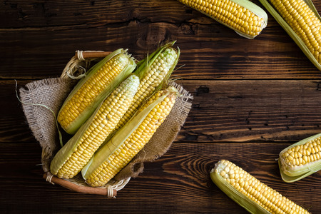 maize cultivation: Fresh corn cobs Stock Photo