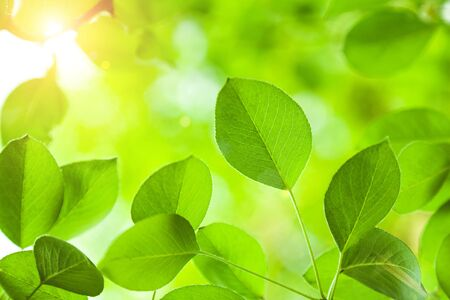 Nature background of green trees leaves and sunlight Stok Fotoğraf