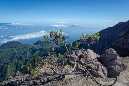An Edelweiss flower or known as Eternal Flower. Raung is the most challenging of all Java's mountain trails, also is one of the most active volcanoes on the island of Java in Indonesia.