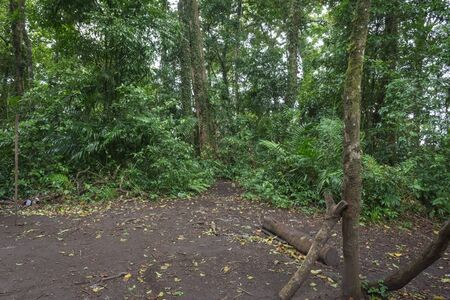 A trail through tropical rainforest to campsite. Raung is the most challenging of all Java's mountain trails, also is one of the most active volcanoes on the island of Java in Indonesia. Banco de Imagens