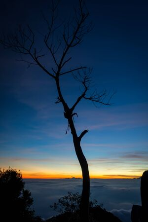 A silhouette of tree with colorful sunset or sunrise sky on campsite 7. Raung is the most challenging of all Java's mountain trails, and the most active volcanoes on the island of Java in Indonesia.