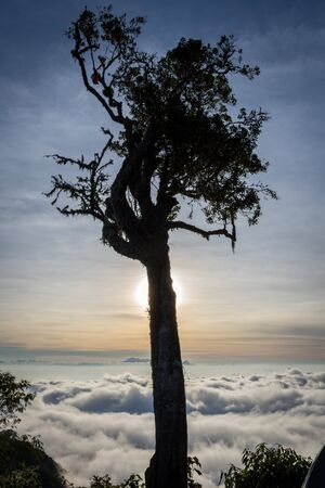 A silhouette of tree with colorful sunset or sunrise sky on campsite 7. Raung is the most challenging of all Java's mountain trails, and the most active volcanoes on the island of Java in Indonesia. Stockfoto