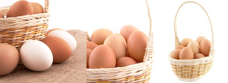 Eggs in basket on white background photo
