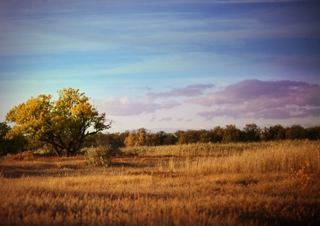 Lonely tree in steppe