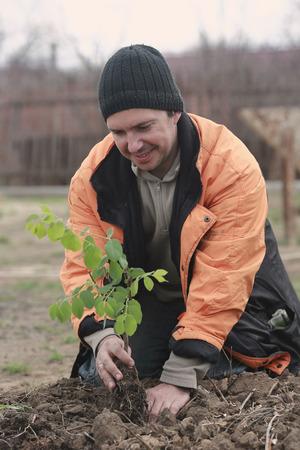 man in the garden, planting a sapling Stock Photo