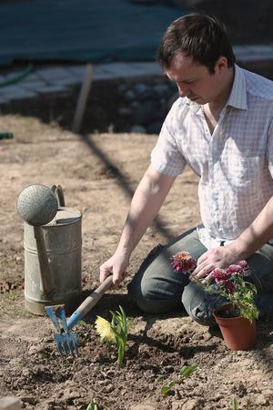 man planting spring flower in a flower bed