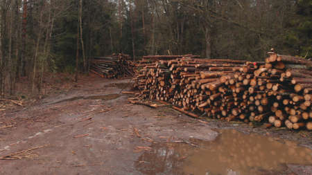 Row of piled logs lie along a muddy road in woods in fall. Waiting for processing at local rural sawmill. Concept of renewable resources