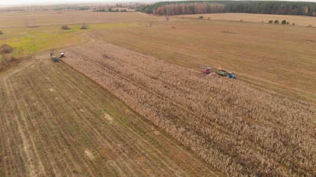 Two pairs of combined agricultural crews harvesting corn in the fall. Self-propelled forage harvesters cut dry stalks and unload the crushed mass into tractor trailers. Wide-angle aerial view