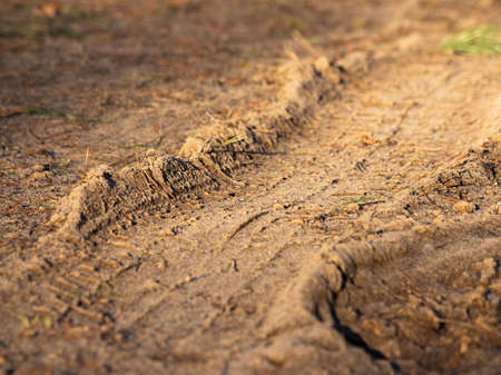 The track of a car tire tread in the frozen ground in a wooded area in sunny weather. Shooting with selective focus