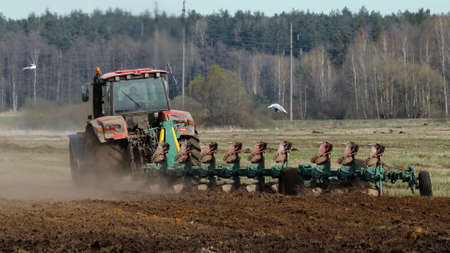 Modern tractor plows farmland with a productive multi-body plow. Gull birds hover over an agricultural device and eat worms after turning the soil layer. Rear view Banque d'images