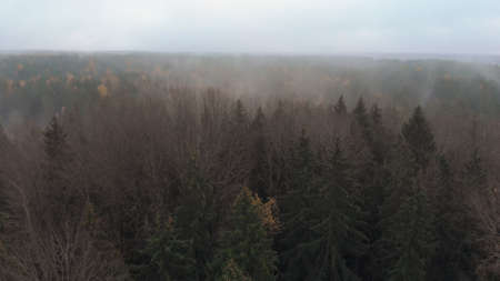 Autumn landscape with a misty forest with mixed coniferous and deciduous trees, mostly green firs. Wide-angle shot from above Banque d'images