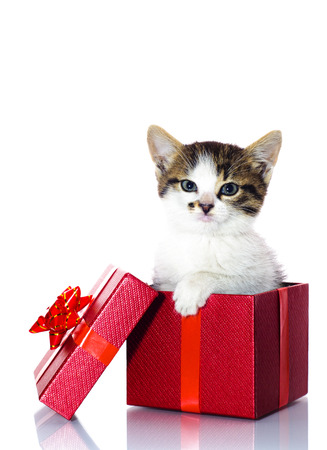 Kat in doos aanwezig Stockfoto - 25601096