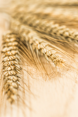 Пшеница Фото со стока