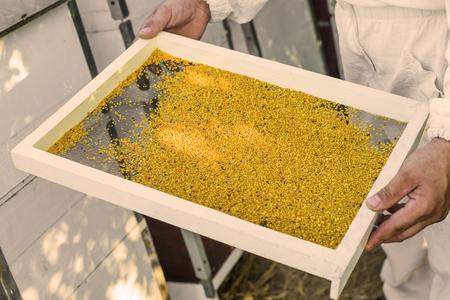 Bee Pollen Banque d'images