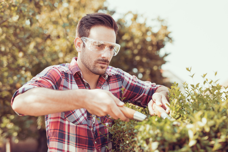 Close up gardener cutting a hedge in the garden.