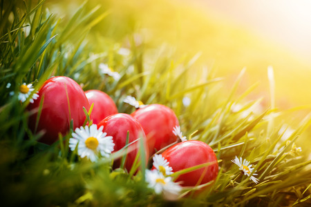 daises: Red Easter Eggs in green grass arranged with daises.Christian religious holiday.