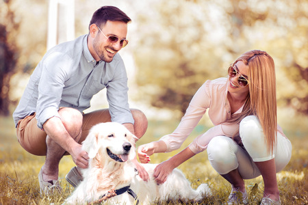 Summer walk in the fresh air with a puppy retriever. Stock Photo