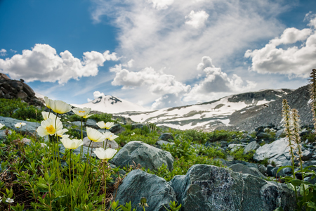 Beautiful white flowers and rocks with sky and cloud background Stock Photo