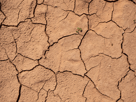 Natural dry and cracked ground texture with little green plant