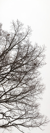 Ultrahigh resolution abstract background. Tree branches silhouette without leaves on pale white sky Reklamní fotografie