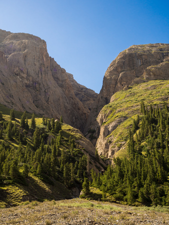 Beautiful mountain view with forest and clear blue sky Reklamní fotografie
