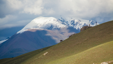 Horse grazes on a green hill with snow peaks and clouds background